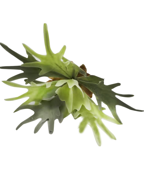 artificial antler succulent leaf